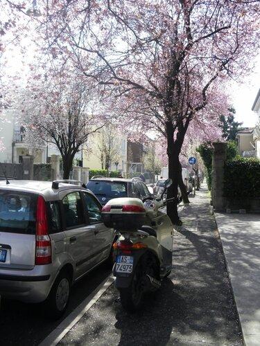 padova-via-monte-grappa-21marzo2012-1