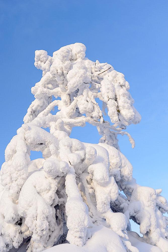Фотография 13. В Пермском крае маленькой ёлочке не холодно зимой, поскольку она укрыта снежной шапкой. Отзывы о прогулке на Каменный город. 1/160, +0.67, 8.0, 200, 38.