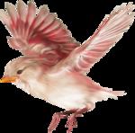 птица13.png