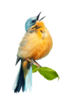 птица14.png