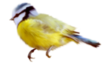 птица40.png