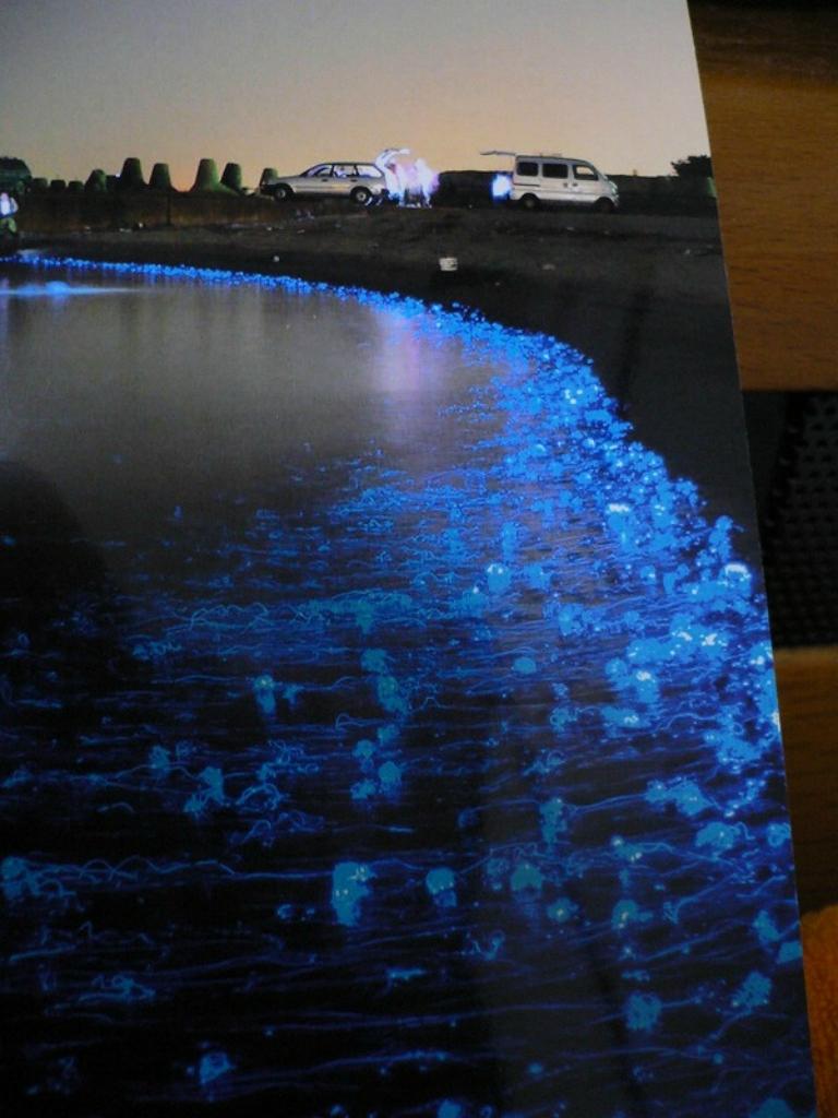 Светящиеся медузы на Тояма Бэй, Япония