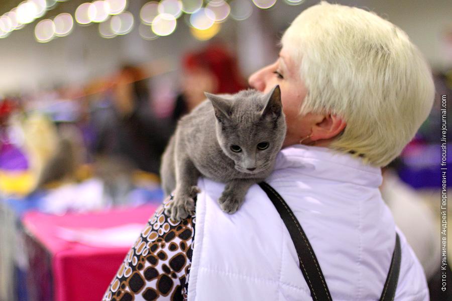 Русская голубая кошка. Питомник «Mertsana»