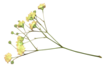 LaurieAnnHGD_Flowers3.png
