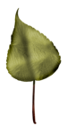 LaurieAnnHGD_Leaf.png