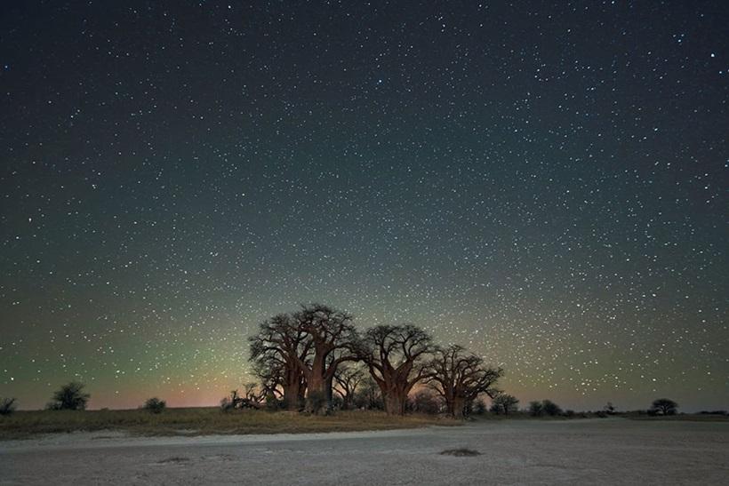 Фотограф Бет Мун: древние деревья Африки под звездным небом 0 136235 91b8e631 orig