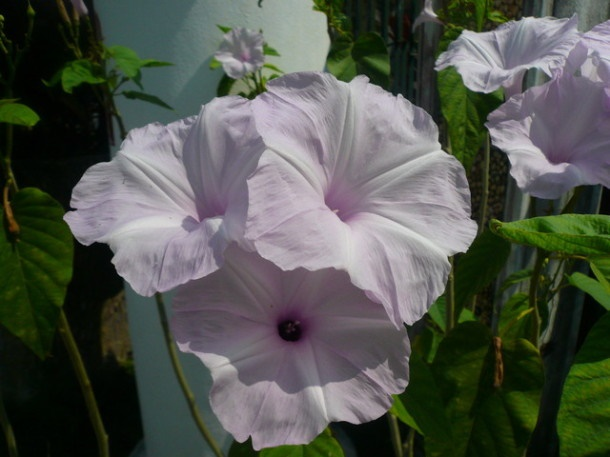 Цветы Таиланда 0 141ae7 cb221502 orig