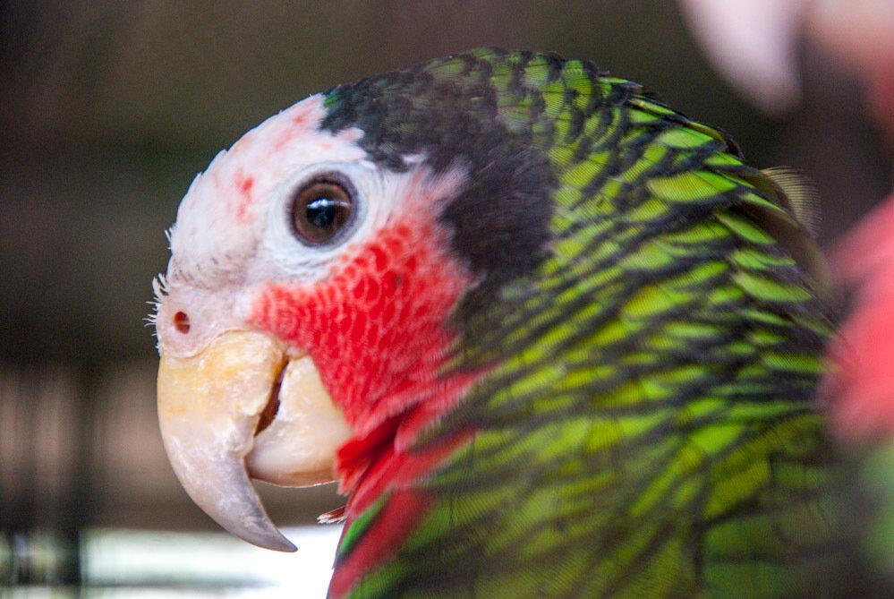 Парк попугаев в Чаченгсао