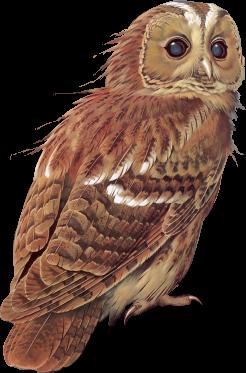 """Tubes oiseaux """"chouettes/hiboux"""