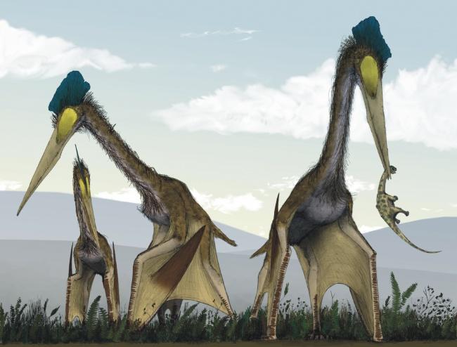 © Mark Witton and Darren Naish/wikimedia  Кетцалькоатль жил 66–68 млн лет назад. Это самый кру