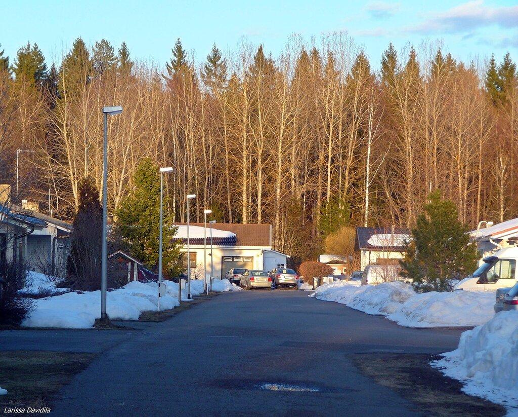 8-4-2012. За жилыми домами начинается лес.