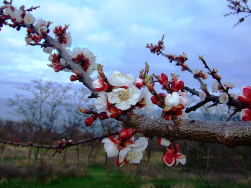 Апрельское цветение