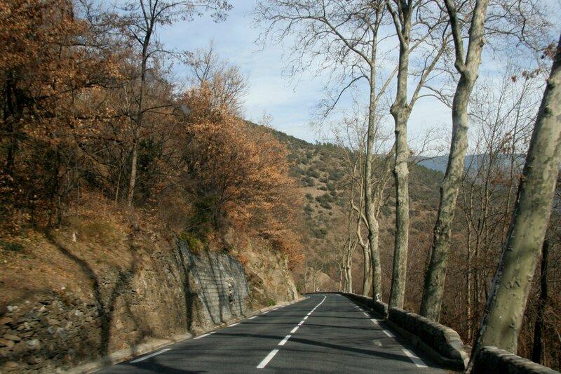 Платаны вдоль дороги в Восточных Пиренеях