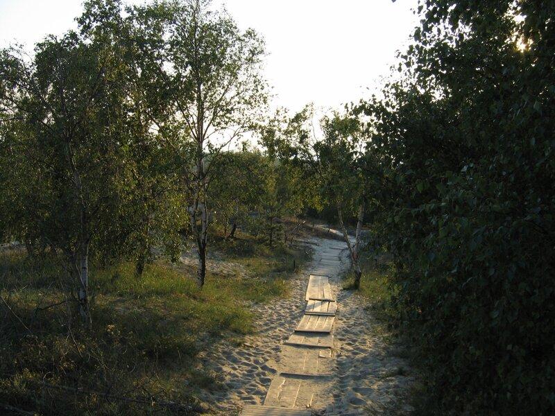 """Дорожка в парке """"Куршская коса"""""""