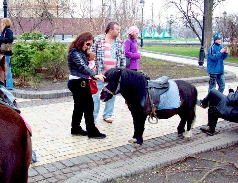 Пони в Хрещатом парке