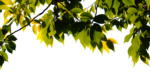 """Шикарный летний скрап-набор..""""Зеленая симфония"""" 0_752c9_40b28a62_S"""