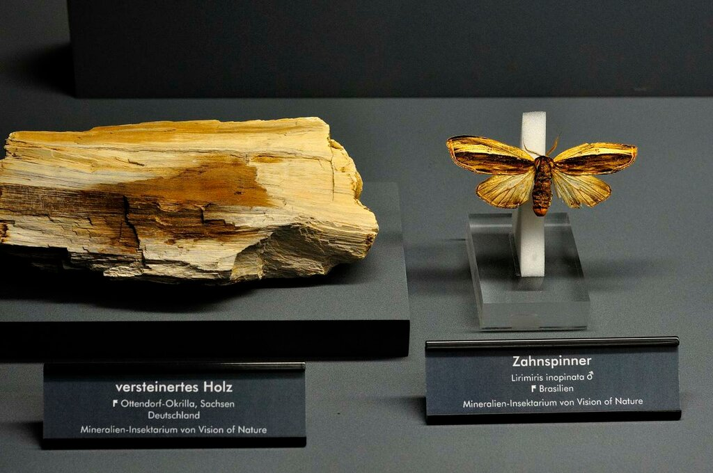 Fossilized wood and Butterfly.
