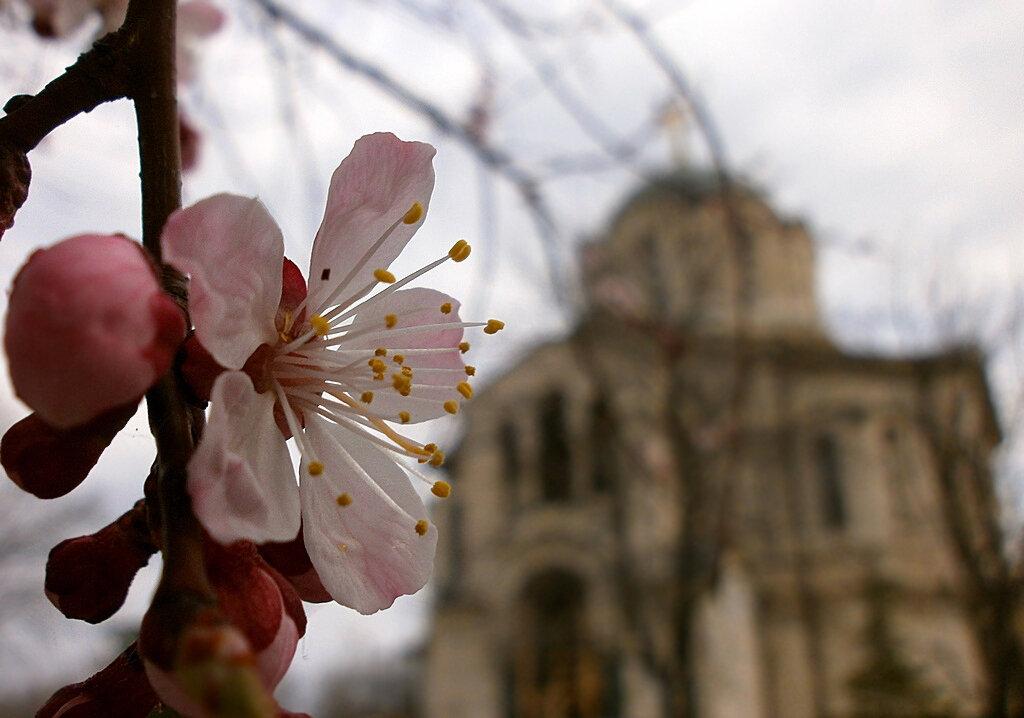 Весна в Севастополе