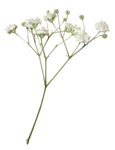 LaurieAnnHGD_Flowers1.png