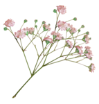 LaurieAnnHGD_Flowers2.png