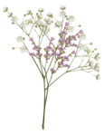 LaurieAnnHGD_Flowers5.png