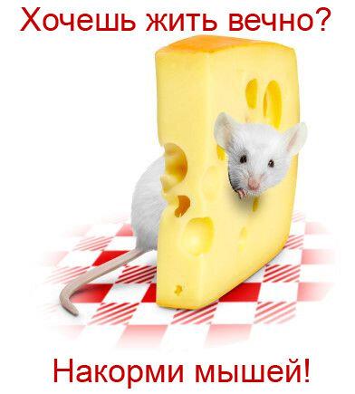 http://img-fotki.yandex.ru/get/6107/126580004.4d/0_ba4d4_4a506e82_L.jpg