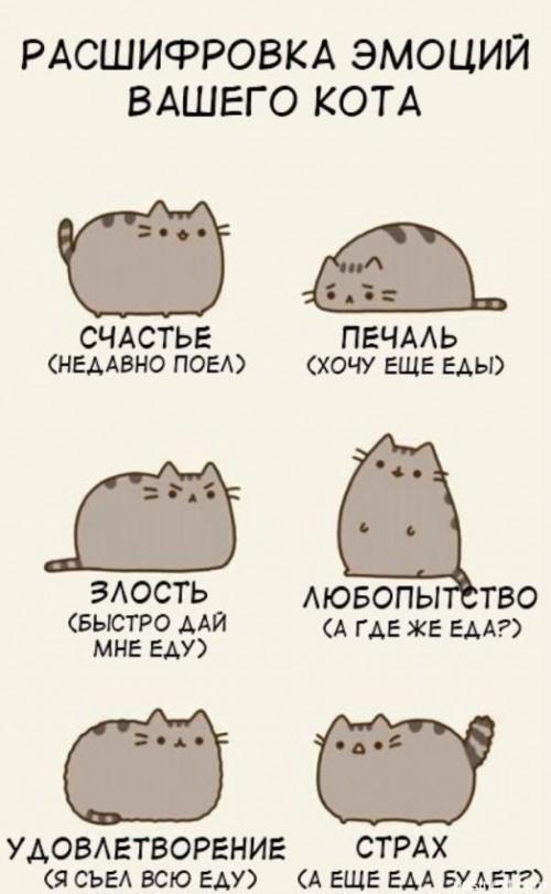 Кошки рулят.