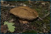 http://img-fotki.yandex.ru/get/6107/15842935.143/0_d09f0_b6aca4c5_orig.jpg