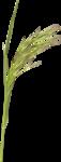 JenU_Grass.png