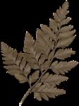 cvd secrets of the heart fern 2 +S.png