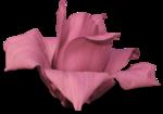 cvd secrets of the heart magnolia 2 +S.png