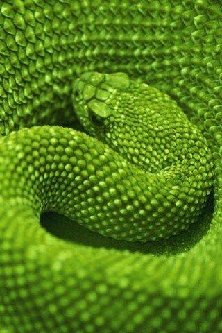 """Схема вышивки  """"Зелёная змея) """": таблица цветов."""