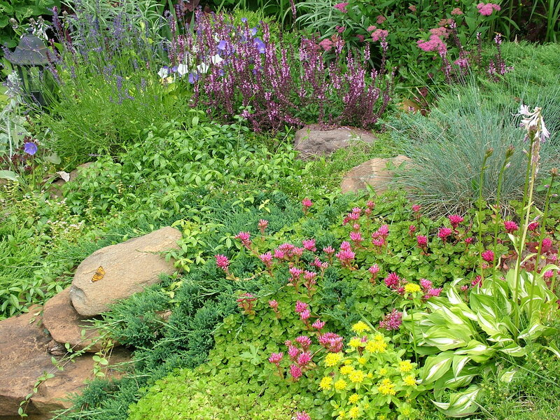 Красивый сад растения для