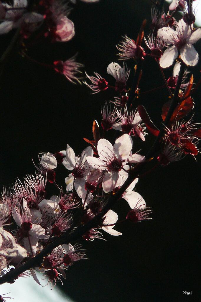 Весна...05.04.2012