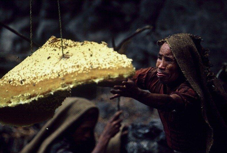 сбор дикого меда