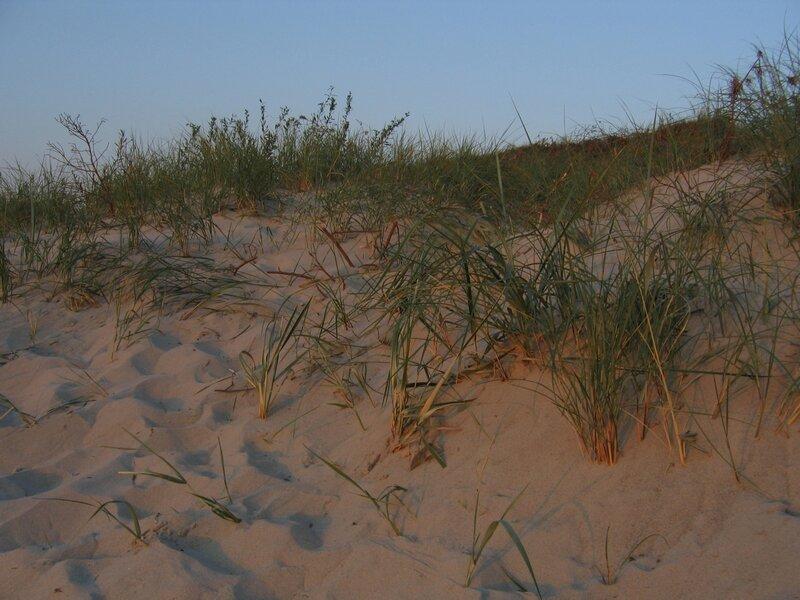 Прибрежная дюна Куршской косы