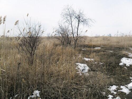 Мартовские снега и камыши