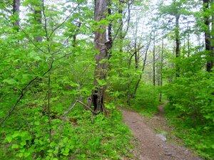 В лесу ... SAM_6696.JPG