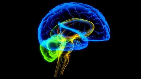 Где в мозгу живёт ум?
