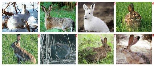 Кто же кролик?