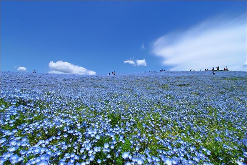 Живописный японский парк Хитати Кайхин 0 1422be dc4f9478 orig