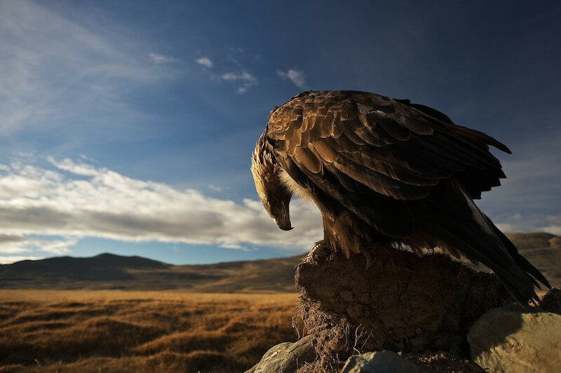 The Grandfather's Eagle