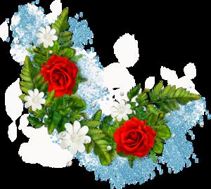 نبات الصبار وفوائده الطبية 0_8206a_ff540816_M