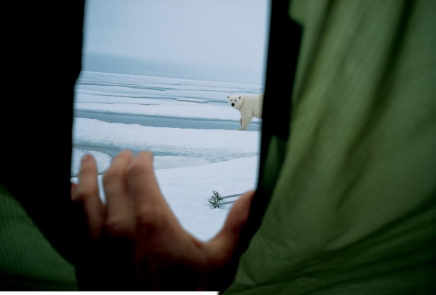 Белый медведь заинтересовался палаткой двух путешественников, которые вознамерились покорить Зем