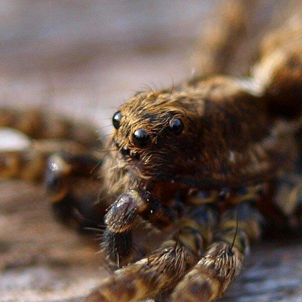 глаза паука с моим отражением крупно