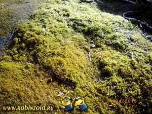 мох на ковре