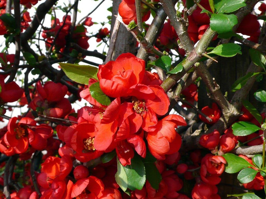 Пришла весна, пора цветения, Тояма, Япония