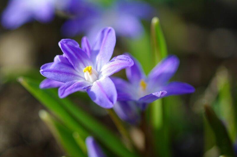 Апрельская радость