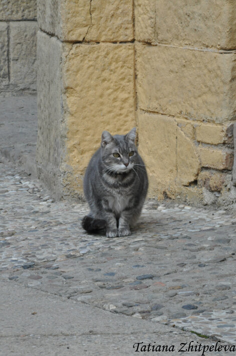барселонский кот