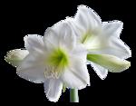 1110 - flower - LB TUBES.png